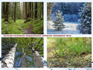 Больше половины территории области занимают леса