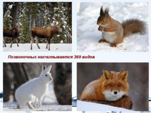 Позвоночных насчитывается 369 видов