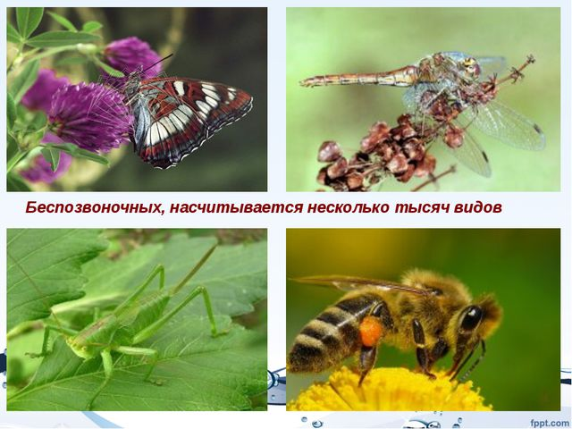 Беспозвоночных, насчитывается несколько тысяч видов