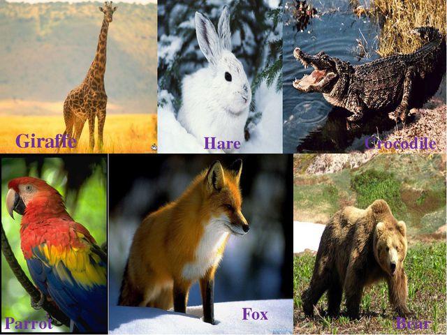 Giraffe Hare Crocodile Parrot Fox Bear