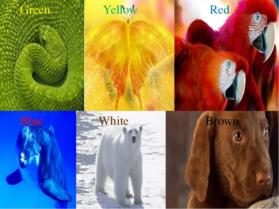 Green Yellow Red Blue White Brown