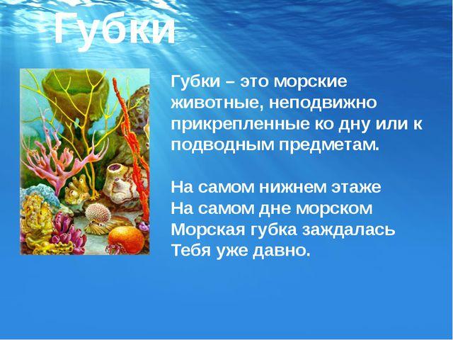 Губки – это морские животные, неподвижно прикрепленные ко дну или к подводным...