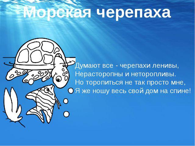 Думают все - черепахи ленивы, Нерасторопны и неторопливы. Но торопиться не та...