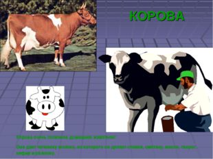 КОРОВА Корова очень полезное домашнее животное! Она дает человеку молоко, из