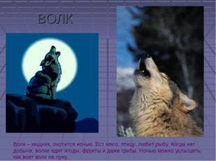 ВОЛК Волк – хищник, охотится ночью. Ест мясо, птицу, любит рыбу. Когда нет до
