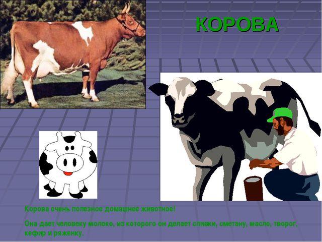 КОРОВА Корова очень полезное домашнее животное! Она дает человеку молоко, из...