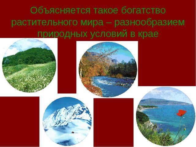 Объясняется такое богатство растительного мира – разнообразием природных усло...