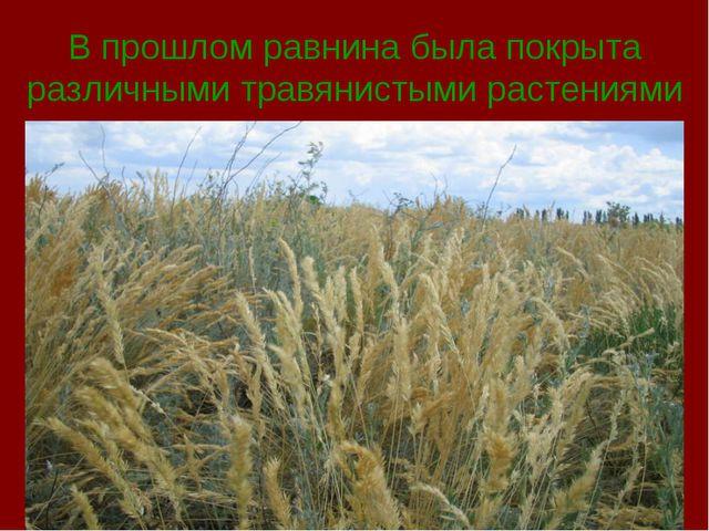 В прошлом равнина была покрыта различными травянистыми растениями