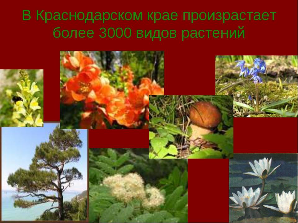 В Краснодарском крае произрастает более 3000 видов растений