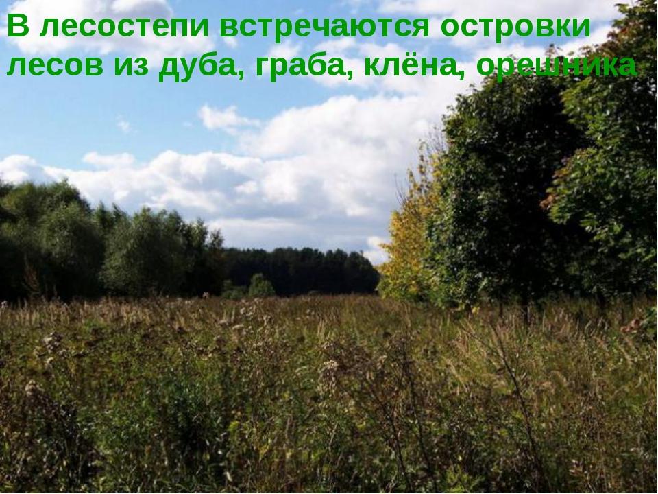 В лесостепи встречаются островки лесов из дуба, граба, клёна, орешника