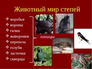 Животный мир степей воробьи вороны галки жаворонки перепела голуби ласточки с