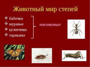 Животный мир степей бабочки муравьи кузнечики тараканы насекомые