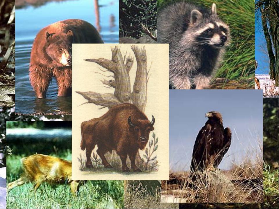 Животный мир леса и лесостепи дикие кабаны дикие свиньи косули медведи волки...