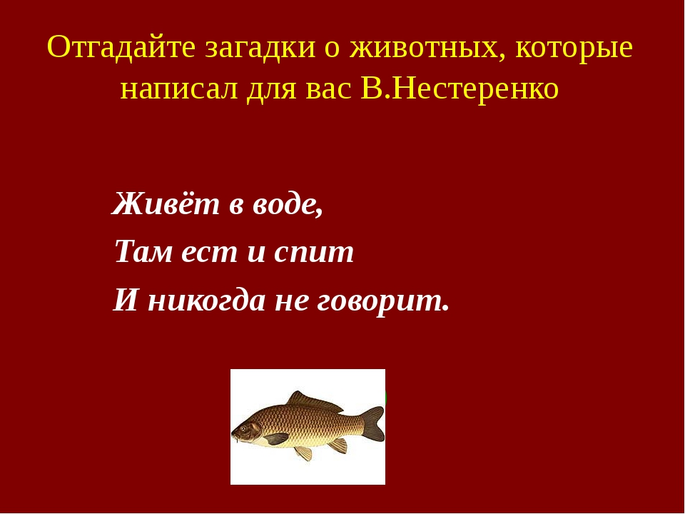 Отгадайте загадки о животных, которые написал для вас В.Нестеренко Живёт в...