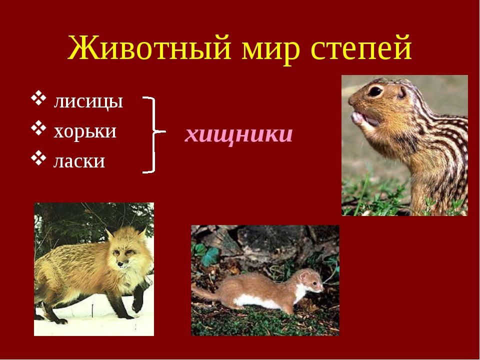 Животный мир степей лисицы хорьки  ласки хищники