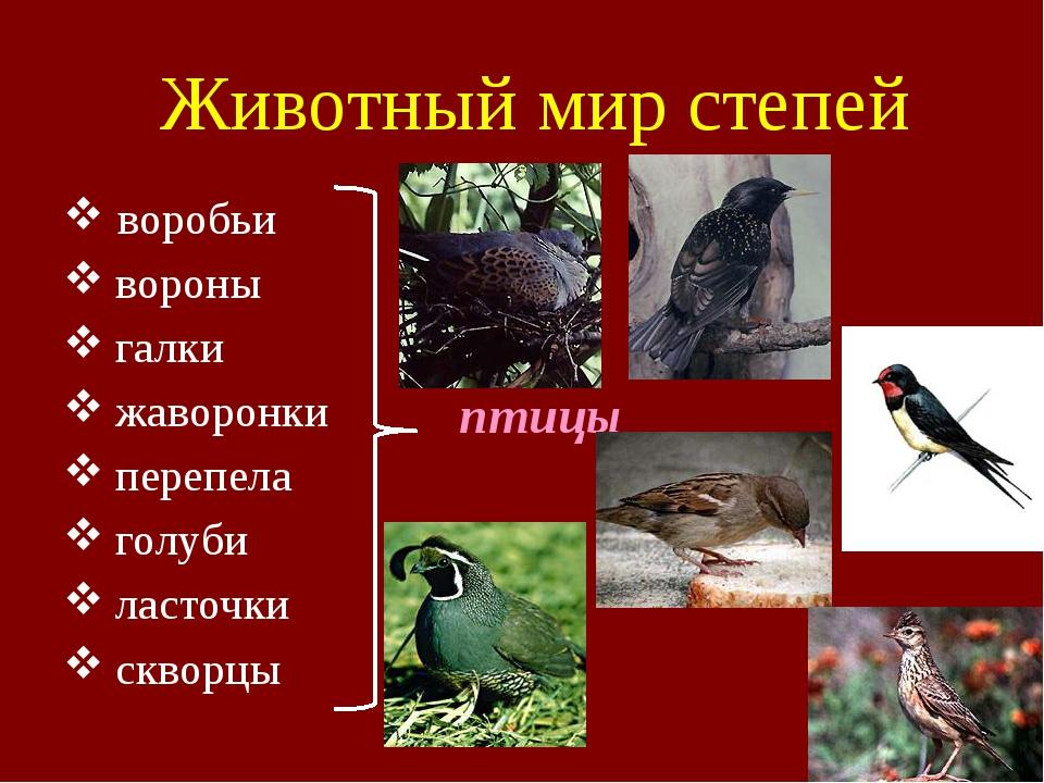 Животный мир степей воробьи вороны галки жаворонки перепела голуби ласточки с...
