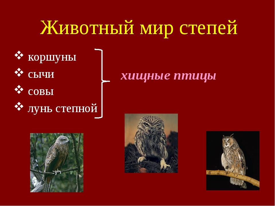 Животный мир степей коршуны сычи совы лунь степной хищные птицы