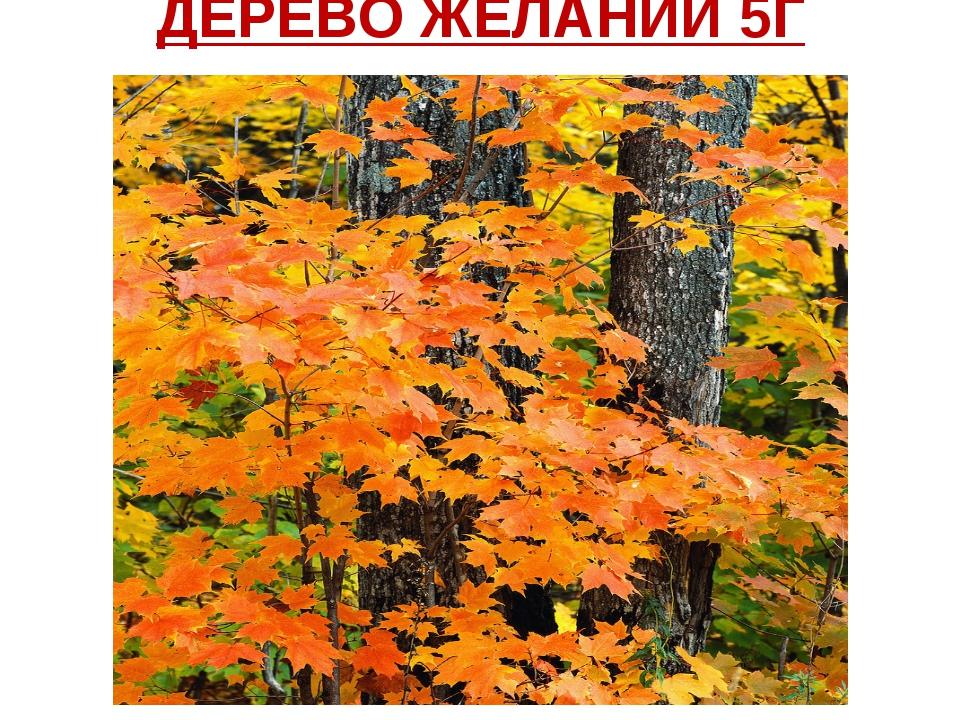 ДЕРЕВО ЖЕЛАНИЙ 5Г класса