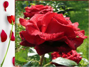 …Как часто грудь её вздыхает, Как часто тихое лицо Мгновенной розою пылает…