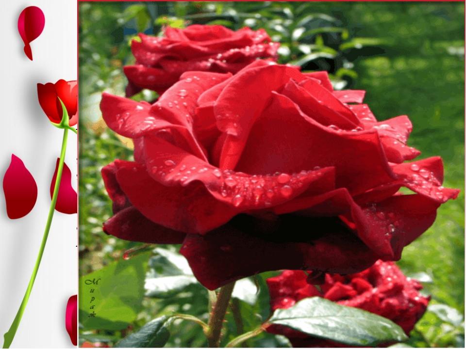 …Как часто грудь её вздыхает, Как часто тихое лицо Мгновенной розою пылает…...