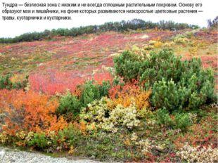 Тундра — безлесная зона с низким и не всегда сплошным растительным покровом.