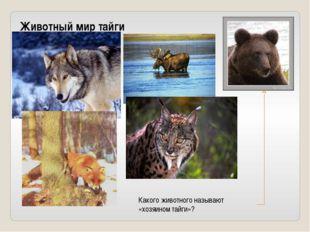 Животный мир тайги Какого животного называют «хозяином тайги»?