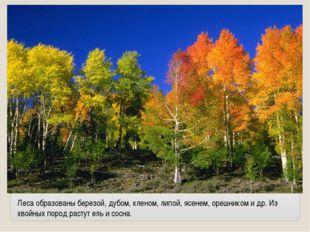 Леса образованы березой, дубом, кленом, липой, ясенем, орешником и др. Из хво