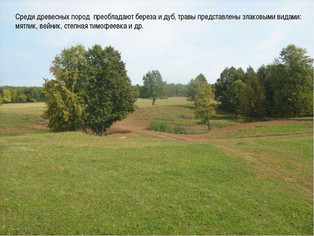 Среди древесных пород преобладают береза и дуб, травы представлены злаковыми...