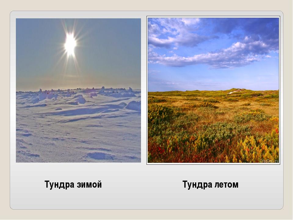 Тундра зимой Тундра летом