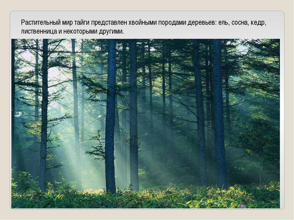 Растительный мир тайги представлен хвойными породами деревьев: ель, сосна, ке...