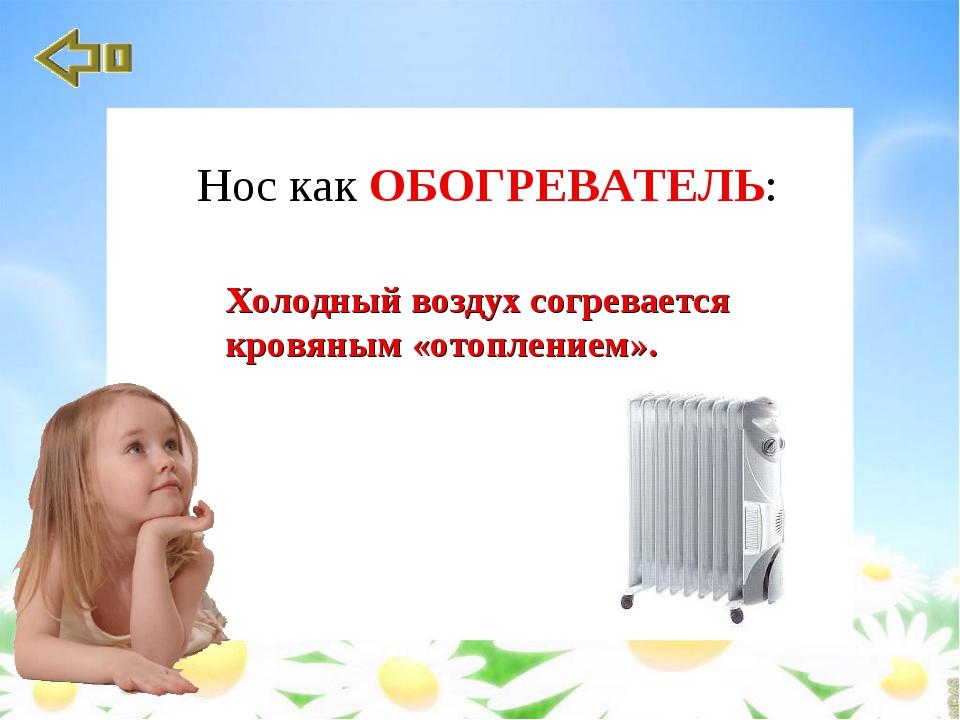 Холодный воздух согревается кровяным «отоплением». Нос как ОБОГРЕВАТЕЛЬ: