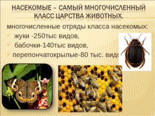 многочисленные отряды класса насекомых: жуки -250тыс видов, бабочки-140тыс ви