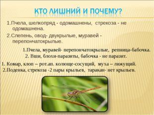 1.Пчела, шелкопряд - одомашнены, стрекоза - не одомашнена. 2.Слепень, овод- д