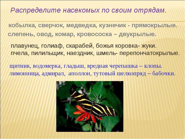 кобылка, сверчок, медведка, кузнечик - прямокрылые. слепень, овод, комар, кр...