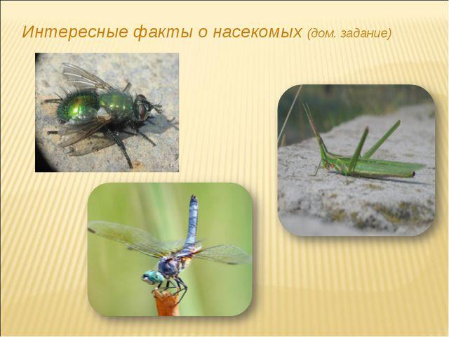 Интересные факты о насекомых (дом. задание)