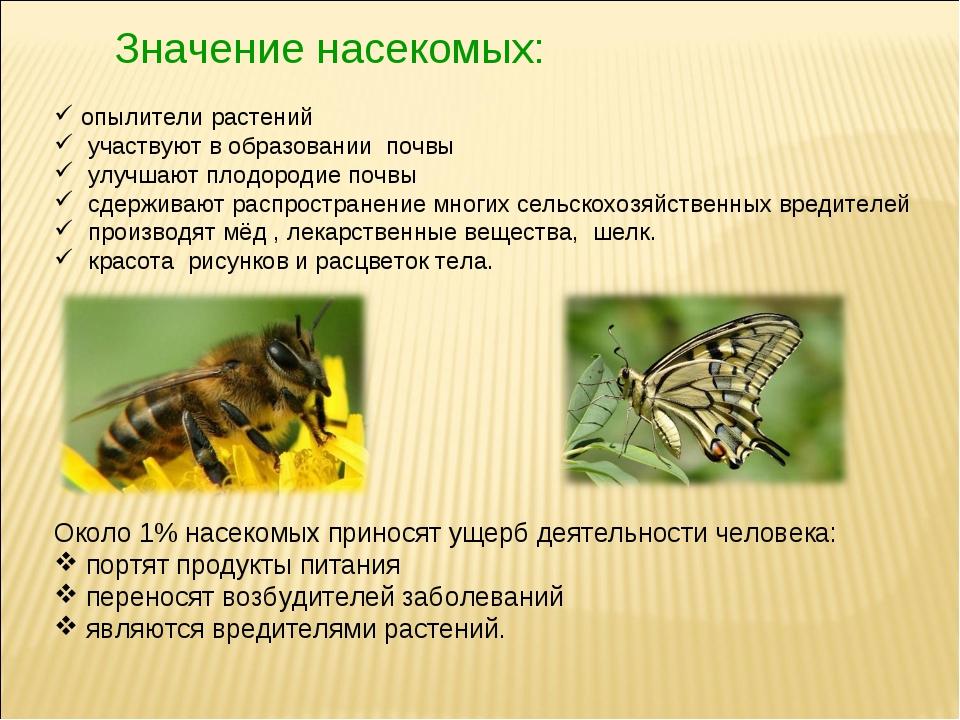Значение насекомых: опылители растений участвуют в образовании почвы улучшают...