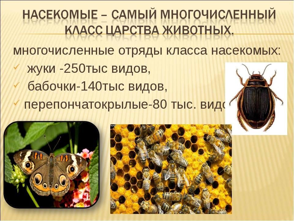 многочисленные отряды класса насекомых: жуки -250тыс видов, бабочки-140тыс ви...