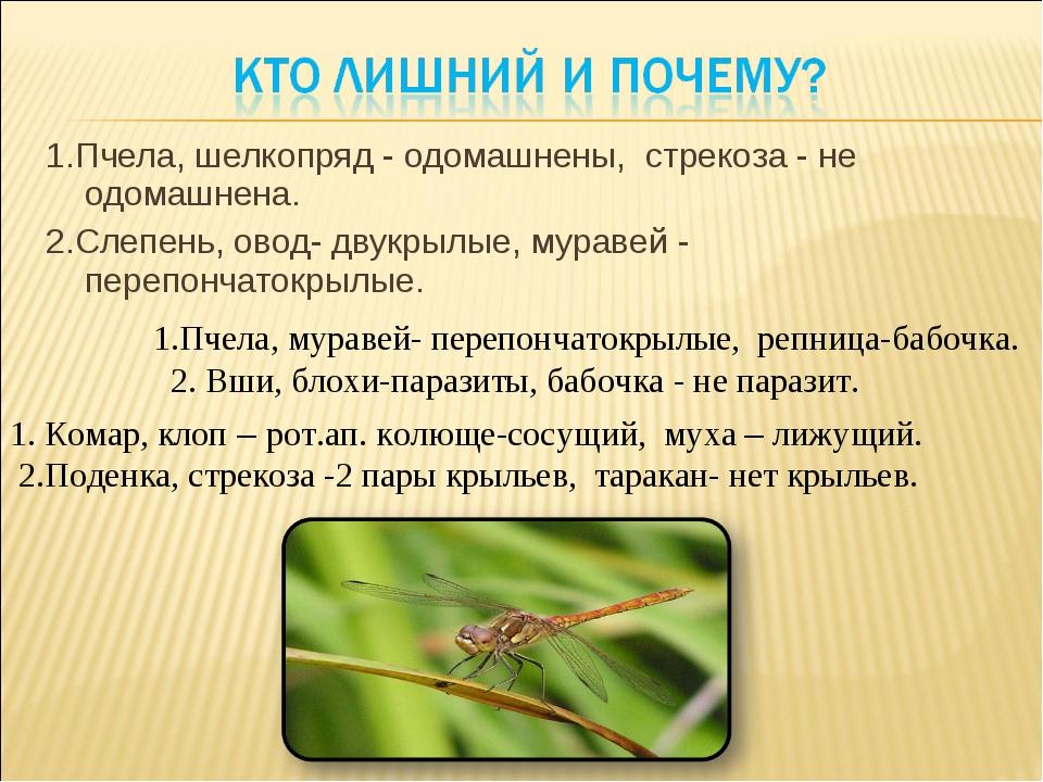 1.Пчела, шелкопряд - одомашнены, стрекоза - не одомашнена. 2.Слепень, овод- д...
