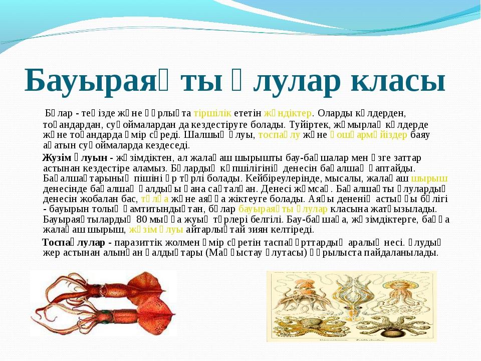 Бауыраяқты ұлулар класы Бұлар - теңізде және құрлықта тіршілік ететін жәндікт...