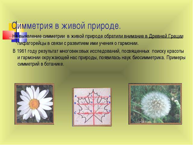 Симметрия в живой природе. На выявление симметрии в живой природе обратили в...
