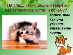 На следу каких хищных зверей нет отпечатков когтей и почему? кошек, так как