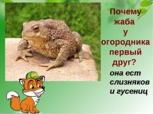 Почему жаба у огородника первый друг? она ест слизняков и гусениц