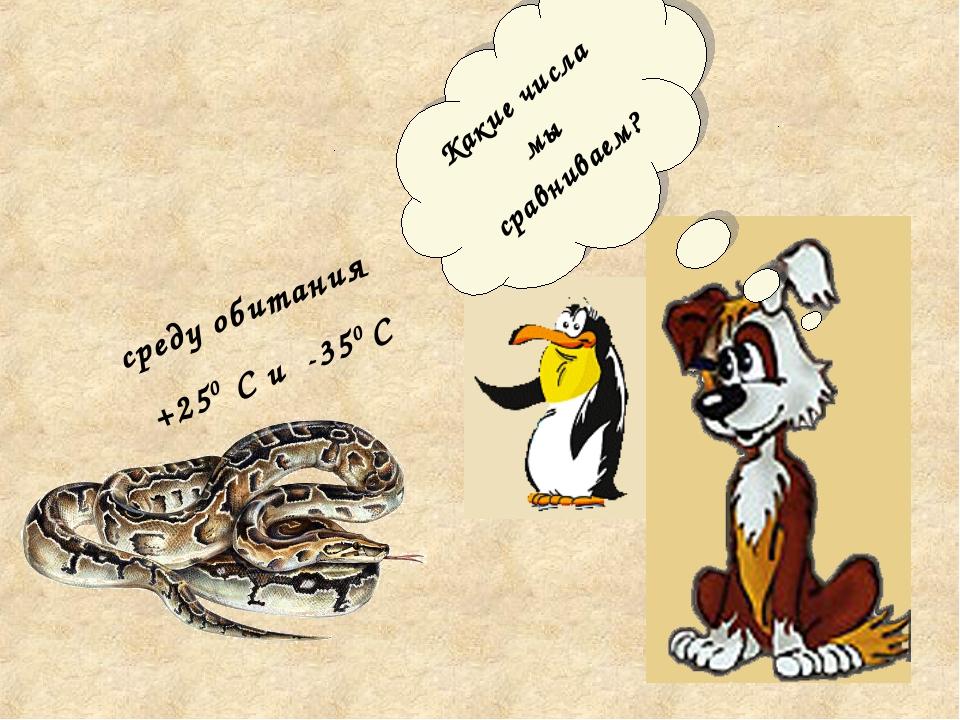 среду обитания +250 С и -350 С Какие числа мы сравниваем?