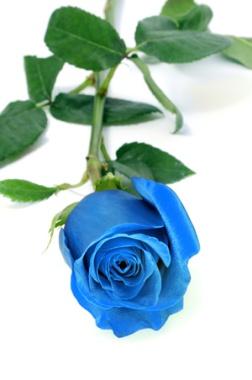 http://murana.ru/_pics/196/rose-08.jpg