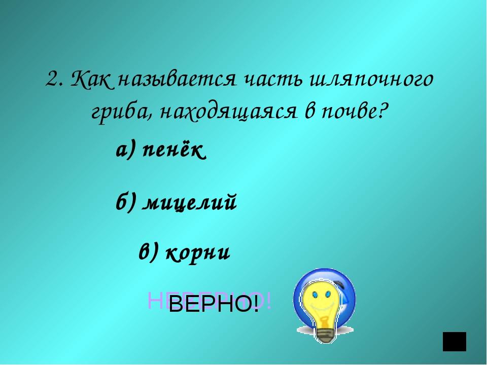 2. Как называется часть шляпочного гриба, находящаяся в почве? а) пенёк б) ми...