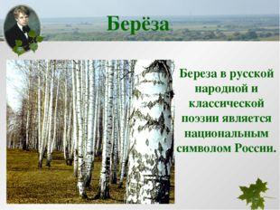 Береза в русской народной и классической поэзии является национальным символо