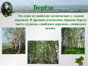 Это одно из наиболее почитаемых у славян деревьев. В древних языческих обряда