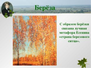С образом берёзки связана лучшая метафора Есенина «страна березового ситца».
