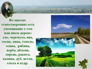 Во многих стихотворениях есть упоминание о том или ином дереве: ель, черемуха