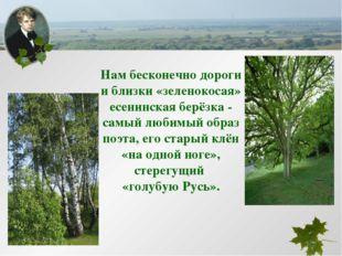 Нам бесконечно дороги и близки «зеленокосая» есенинская берёзка - самый любим
